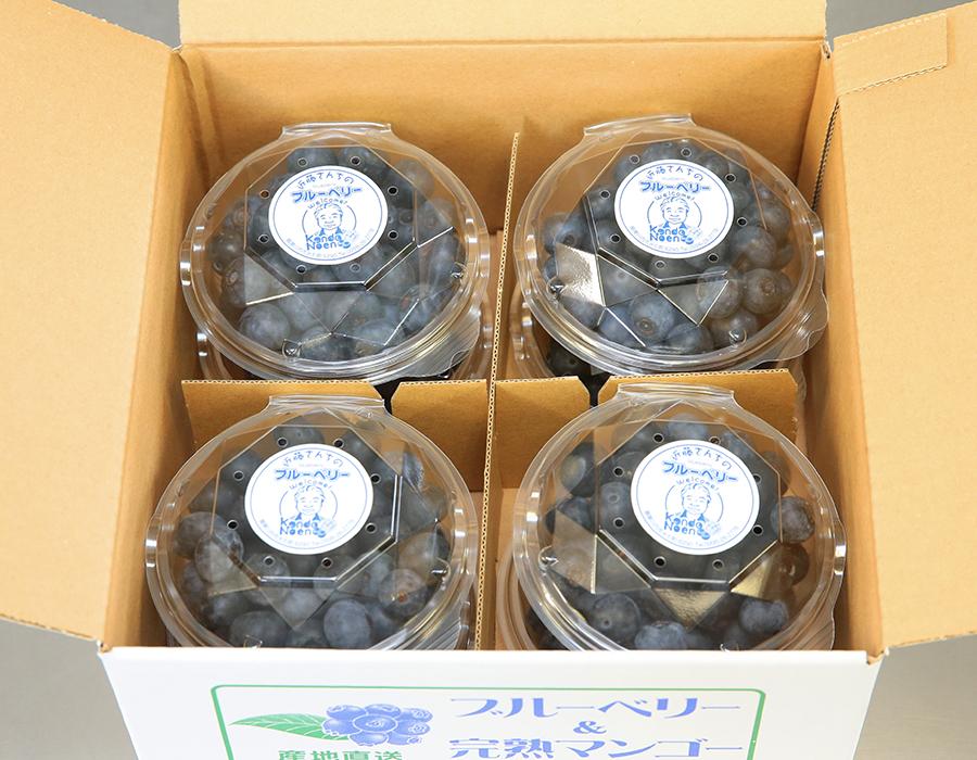 特選ブルーベリー(100gパック8個入り)【生】B-2