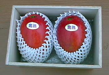 特選贈答用完熟マンゴー 2個 桐箱入り
